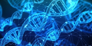 Canva - free DNA